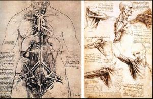 Some of Leonardo DaVinci's anatomical drawings. Photo courtesy of Drawing Academy