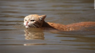 A cat is trying to reach dry ground. Photo courtesy of CNN