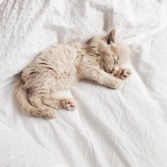 Emily_Gyongyosi_2017-11-27_Kitten.jpg