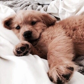 Emily_Gyongyosi_2017-11-27_Puppy.jpg